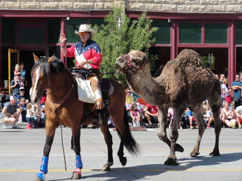 Larry the camel in the 4th of July parade. Submitted by: Erin Biggs