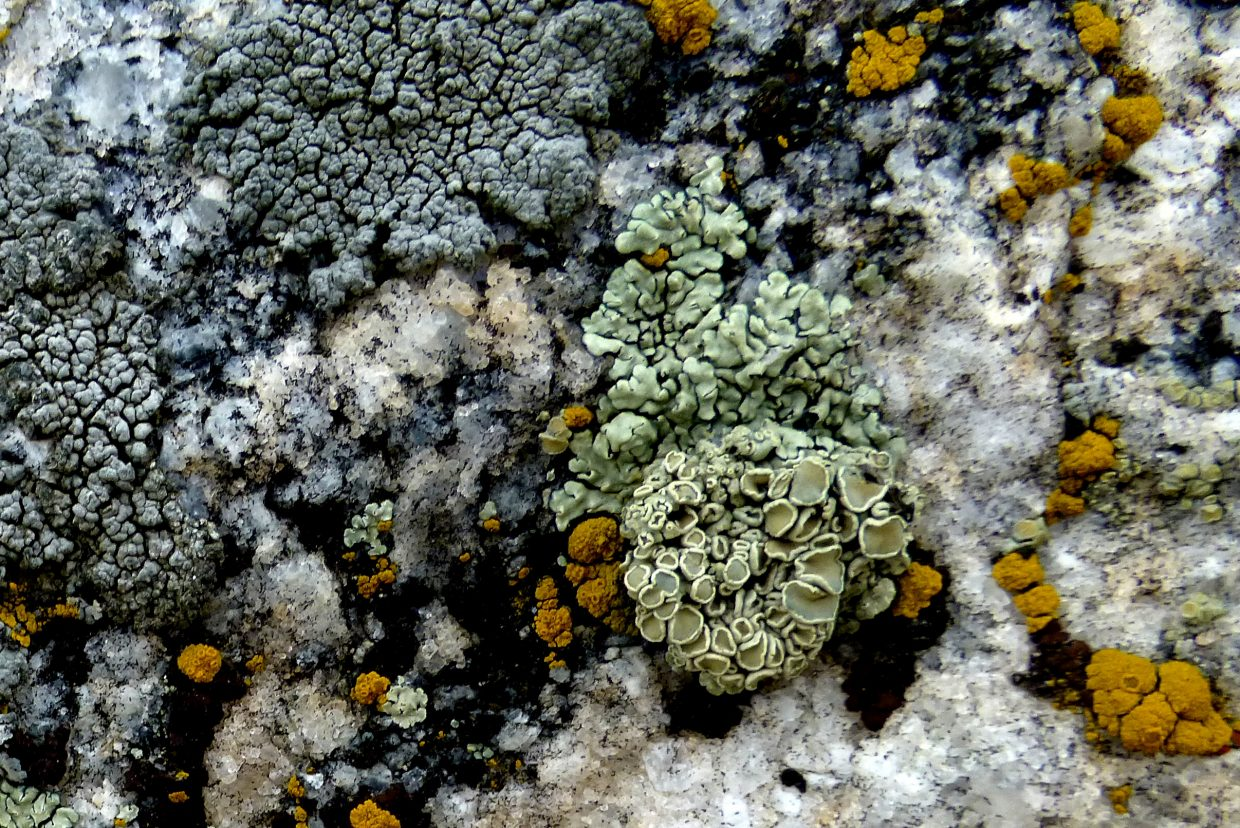 Lichens on a rock along the bike path. Submitted by: Gail Hanley