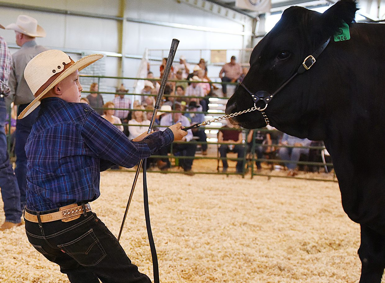 Lloyd Warren, 9, throws himself into the task of getting his steer, Smokey, to move Saturday at the Routt County Fair Junior Livestock auction.
