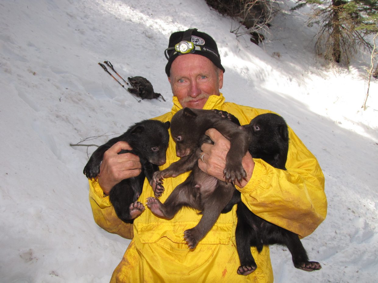 Parks and Wildlife technician Lyle Willmarth holds three bear cubs found in a den.