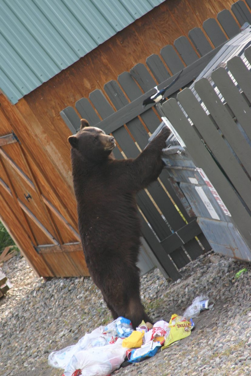 Why it's important to secure trash containers during bear season. By Rockies Condominiums. Submitted by Lynn LaFoe.