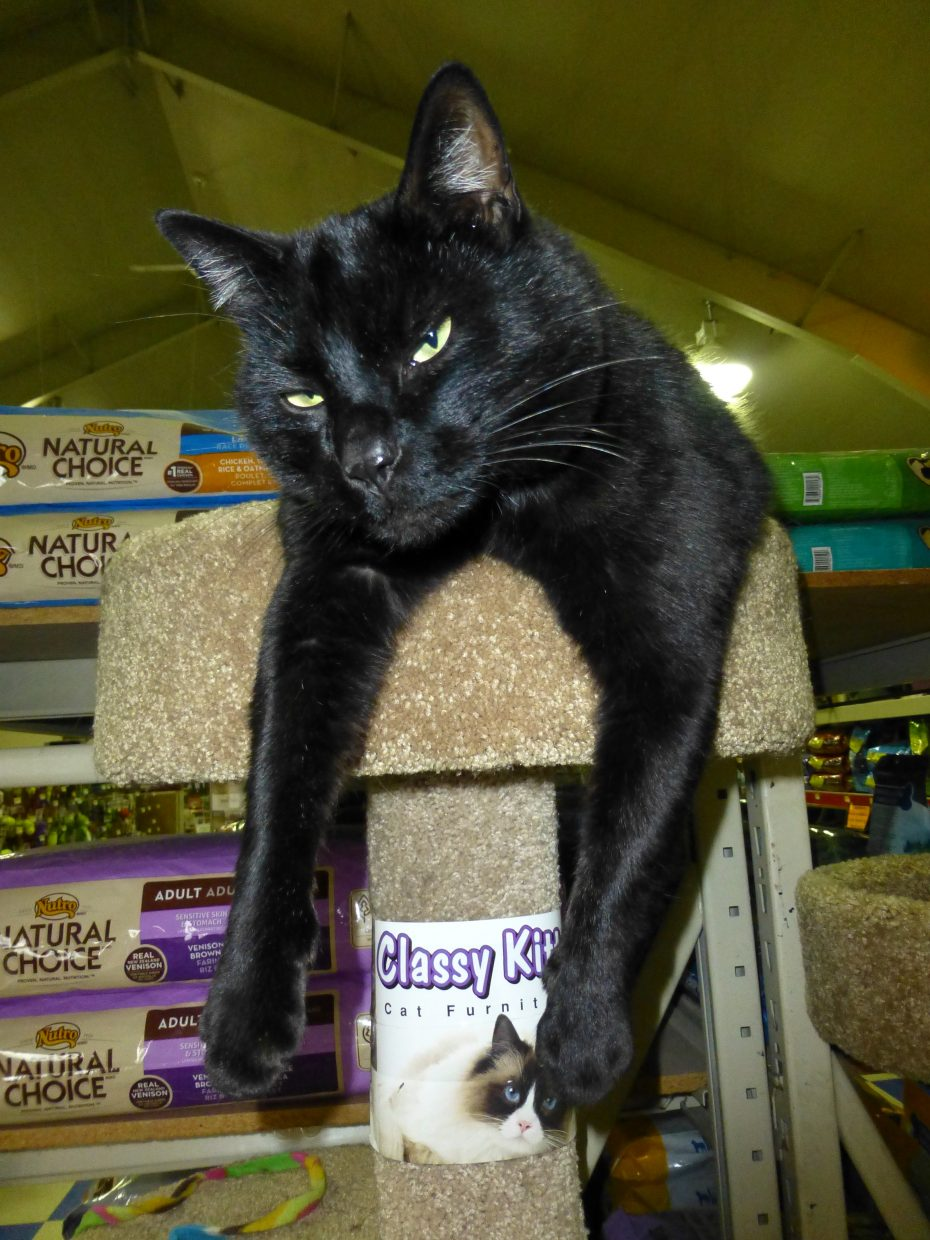 Mojo the guard cat at Elk River feed store. Submitted by: Gail Hanley