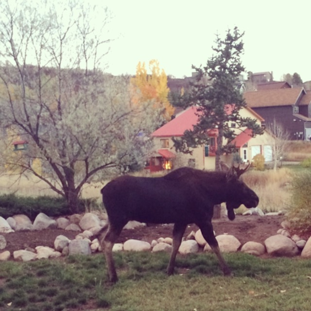 Backyard Bullwinkle. Submitted by: Kim Alessi