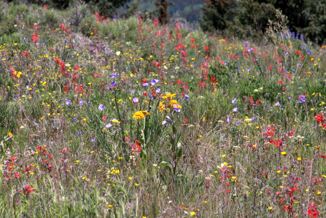 Flat Tops Wilderness July 4th Wildflower-works. Submitted by: Scott Kragerud