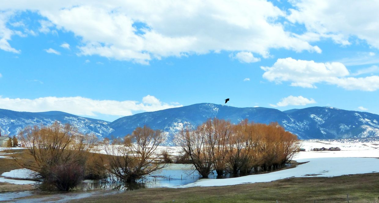 A soggy area where snow is melting and a bird flies near Stagecoach Reservoir. Submitted by: Shannon Lukens