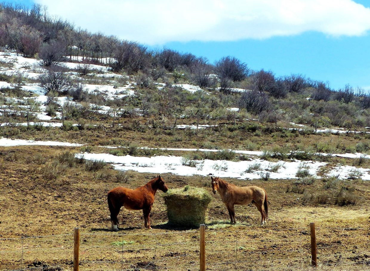 I had to drive from Steamboat to Eagle to watch my daughter's lacrosse game. I took a few pictures. These were all taken near Stagecoach Reservoir. The snow is melting making everything very soggy. Submitted by: Shannon Lukens