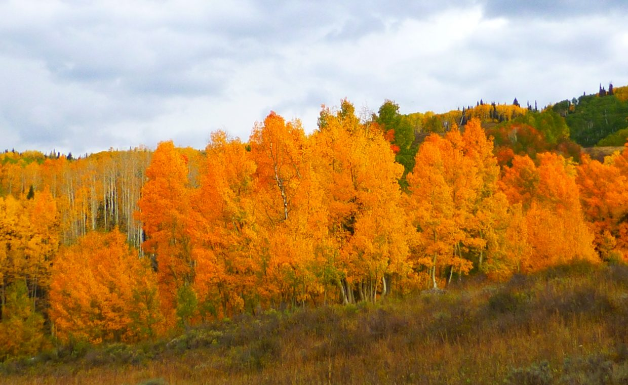 Around Yampa and Stillwater on Saturday. Submitted by: Gail Hanley