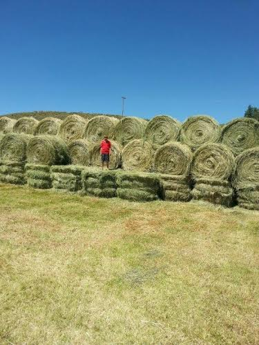 Hay season on Bar GS Ranch. Submitted by Diana Lopes.