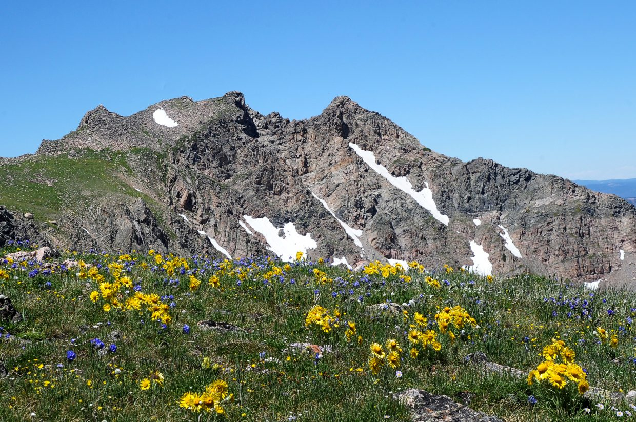 Wildflowers grace the alpine tundra near the summit of Mount Zirkel. At 12,185 feet, the peak is the tallest in Routt County.