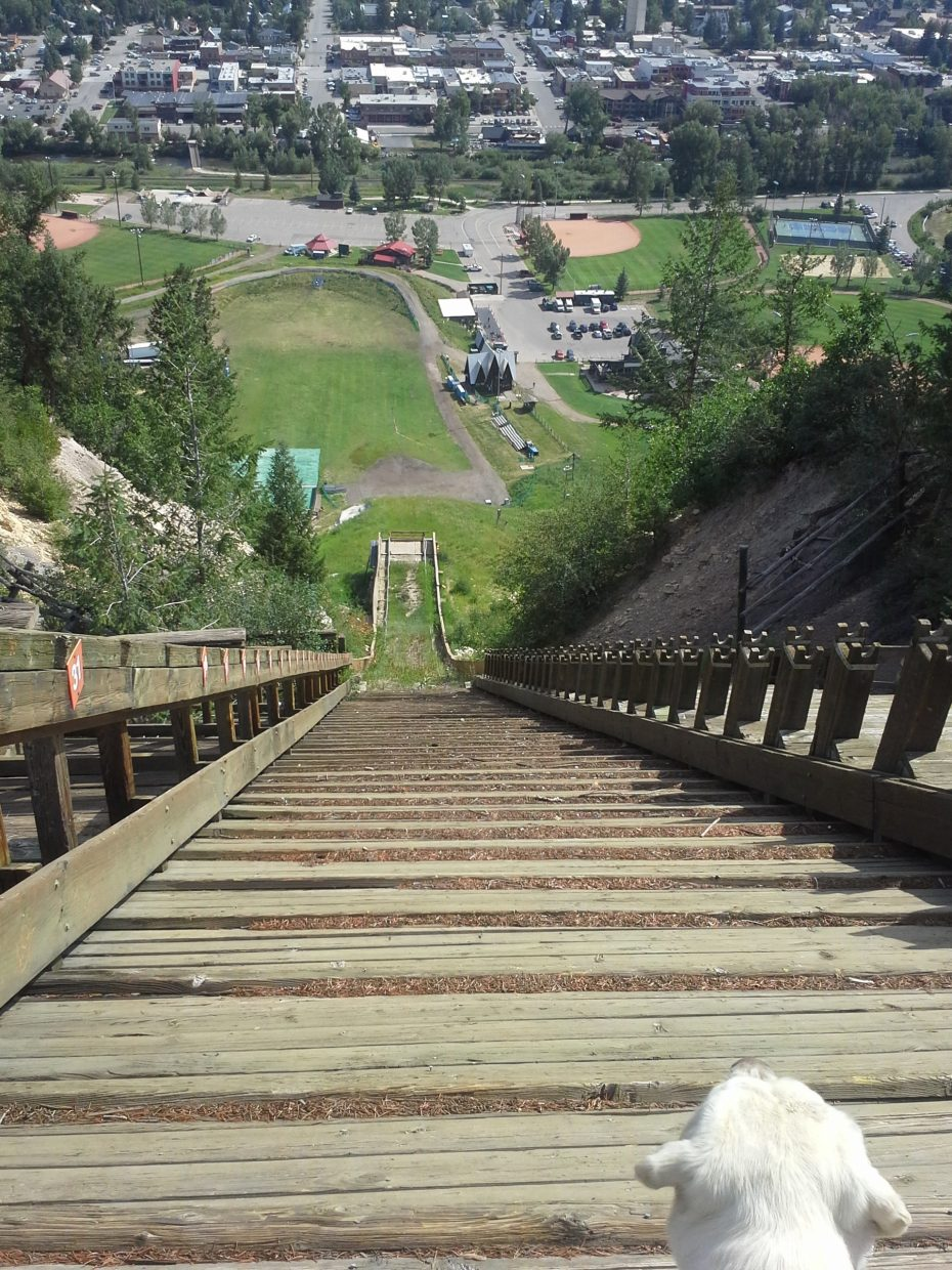 Our dog, Oakley looking down the ski jump. Submitted by Pam Oberly.