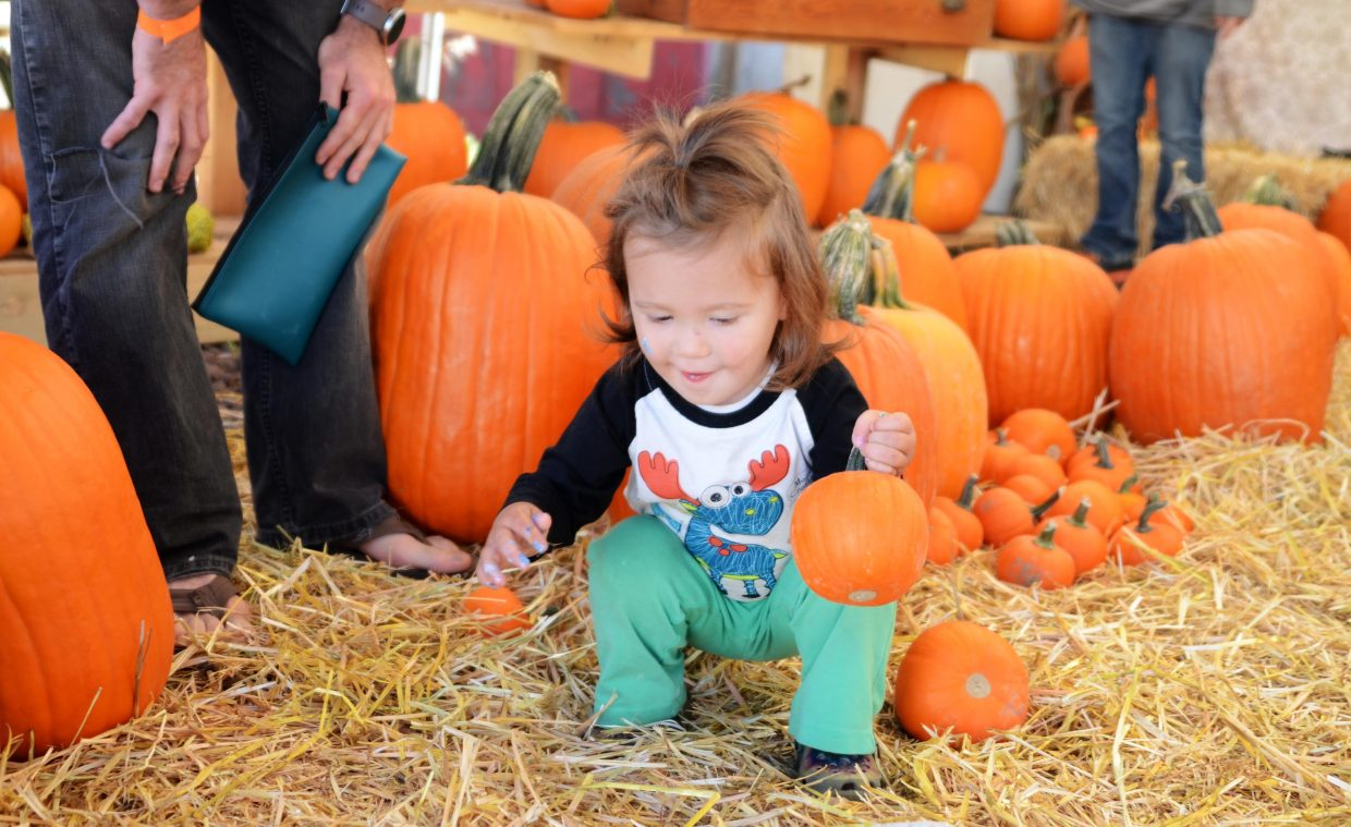 Two-year-old Oliver Sprowls searches for just the right size pumpkin during Sunday's Oaktoberfest in downtown Oak Creek. Dozens of families took to the town's Main Street for a day filled with all sorts of fall activities, such as pie-eating contests and pumpkin decorating.
