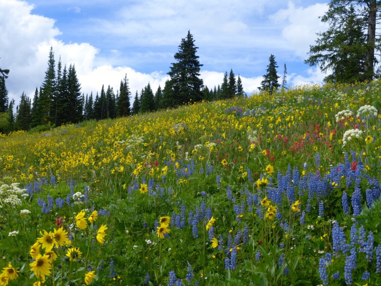 The wildflowers are in full bloom up around Dumont Lake. It's like walking through an Impressionist's painting. Submitted by Jeff Peters.