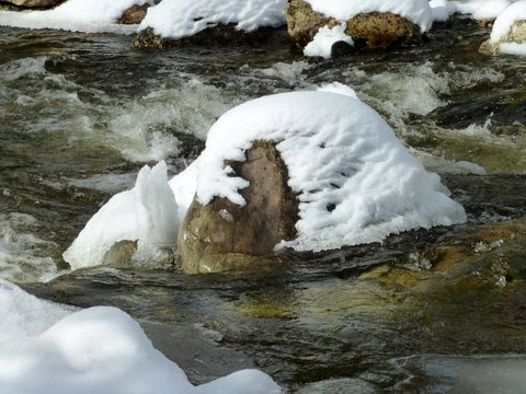 A few things I saw in The Sanctuary along Fish Creek on Thursday. Submitted by: Gail Hanley