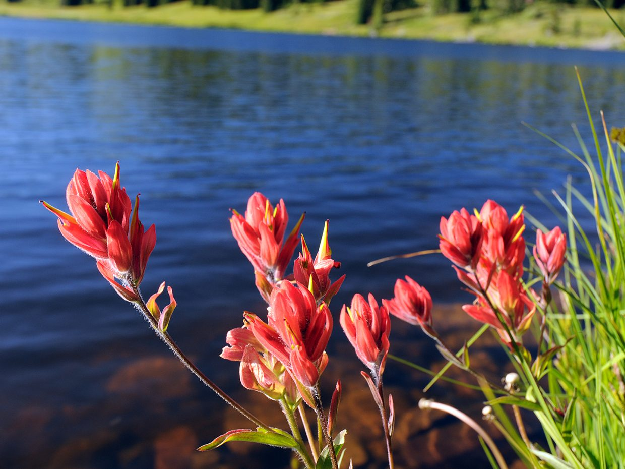 Indian Paintbrush. Dumont Lake. Submitted by Jeff Hall.