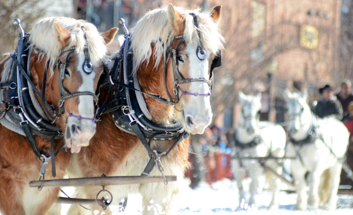 It wouldn't be the Steamboat Springs Winter Carnival without some horse-drawn floats. The Routt County Democrats' carriage was one of many stamping down Lincoln Avenue Sunday for the 102nd Winter Carnival's Diamond Hitch Parade.