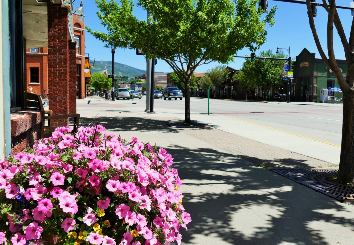 Pink petunias are blossoming all over downtown Steamboat Springs. Submitted by Shannon Lukens.