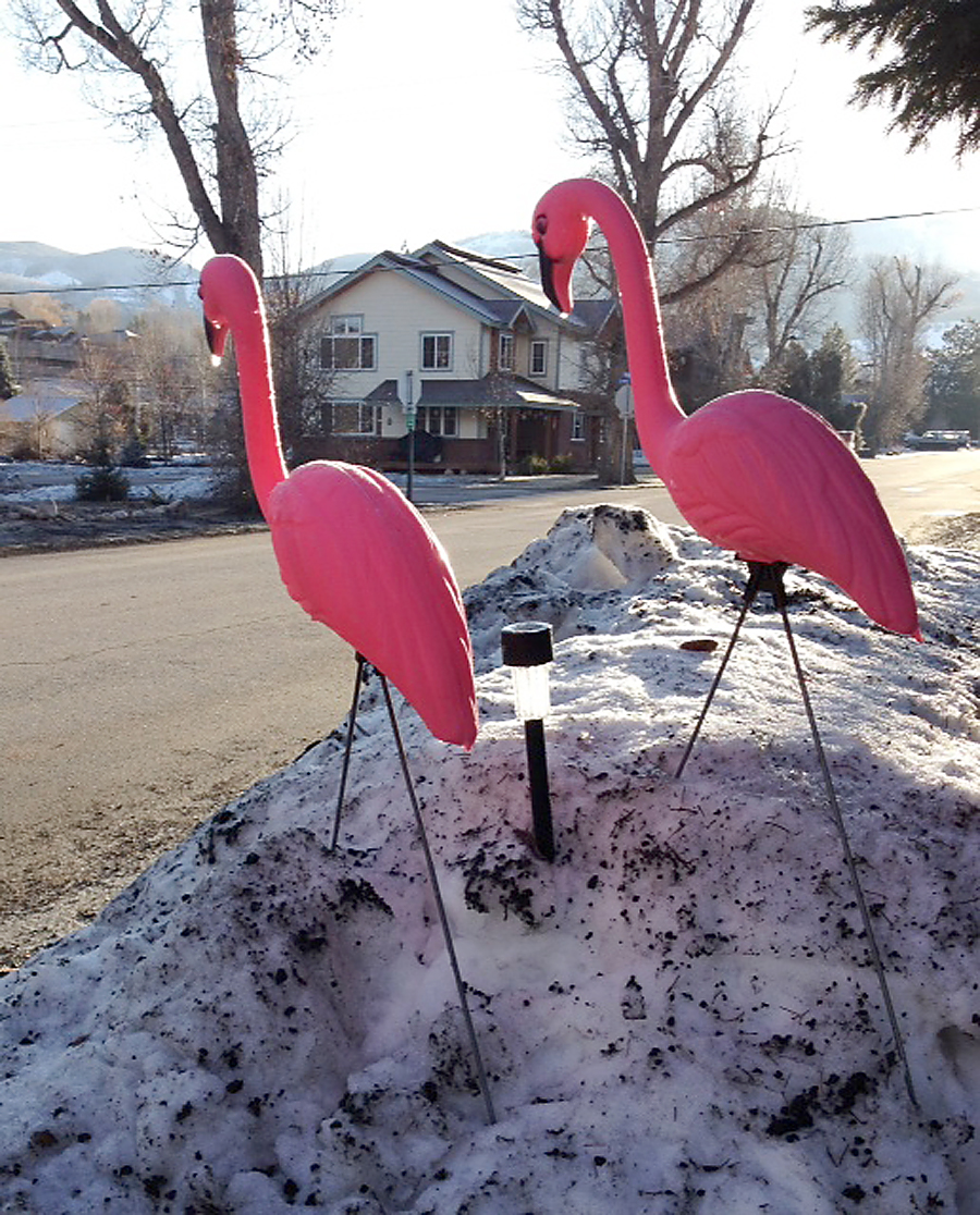 A pair of pink flamingos was stolen this week from the front yard of Mark Traum on Logan Street in Old Town Steamboat Springs. He'd like them back, no questions asked.
