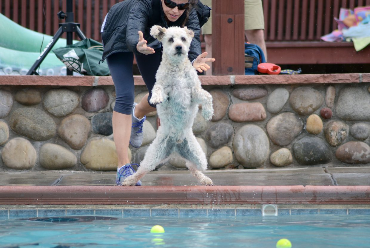 Loren Parsons tosses her dog Zephyr into the lap pool at the Old Town Hot Springs Poochy Paddle a few years back.