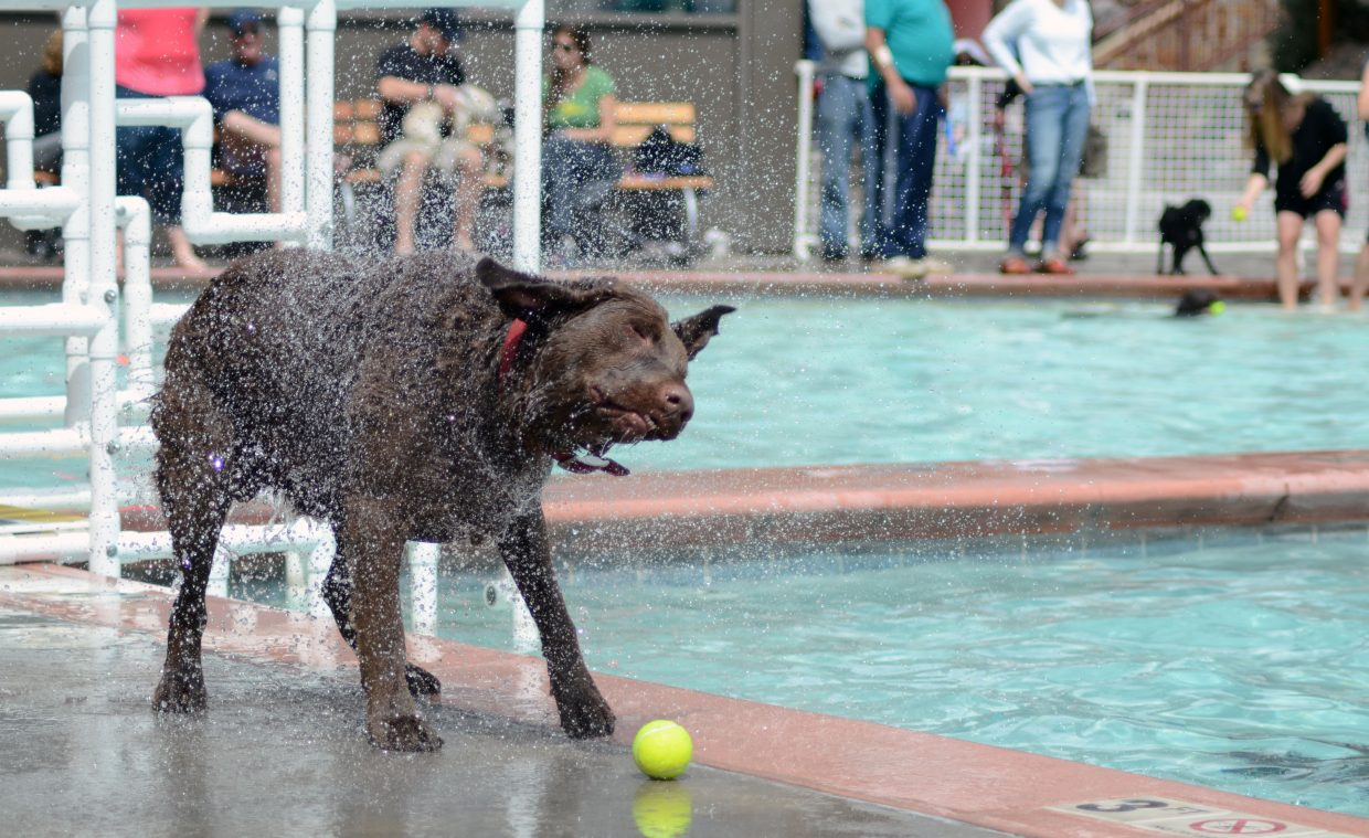 Nancy Johnson's dog Hunter shakes off some water at the Old Town Hot Springs' annual Poochy Paddle on Sunday. Funds raised from the cost of admission and donations at the event benefited the Steamboat Springs Animal Shelter.