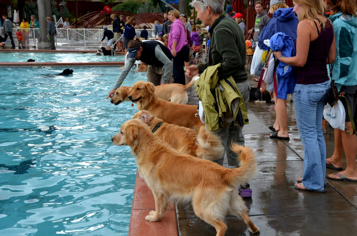 Sunday's Poochy Paddle at Old Town Hot Springs. Submitted by: Shannon Lukens
