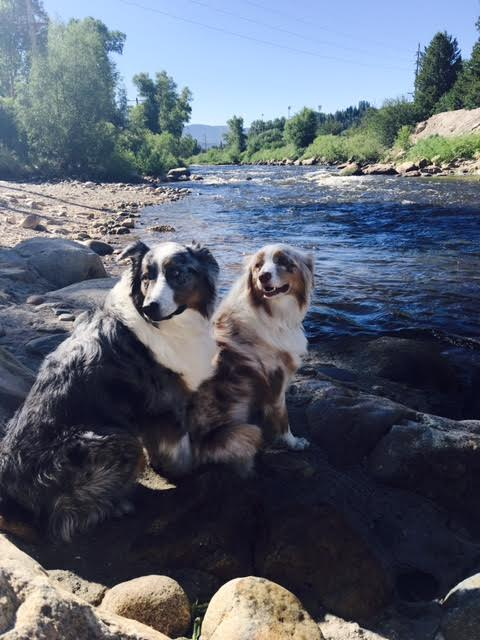 Pups on the Yampa River. Submitted by Rachel Anthony.
