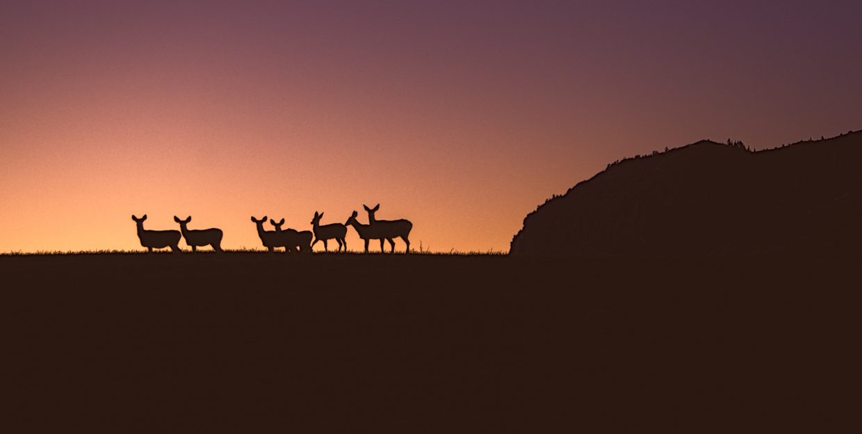 Deer at the head of Sleeping Giant on Sunday. Submitted by: Cyndi Marlowe