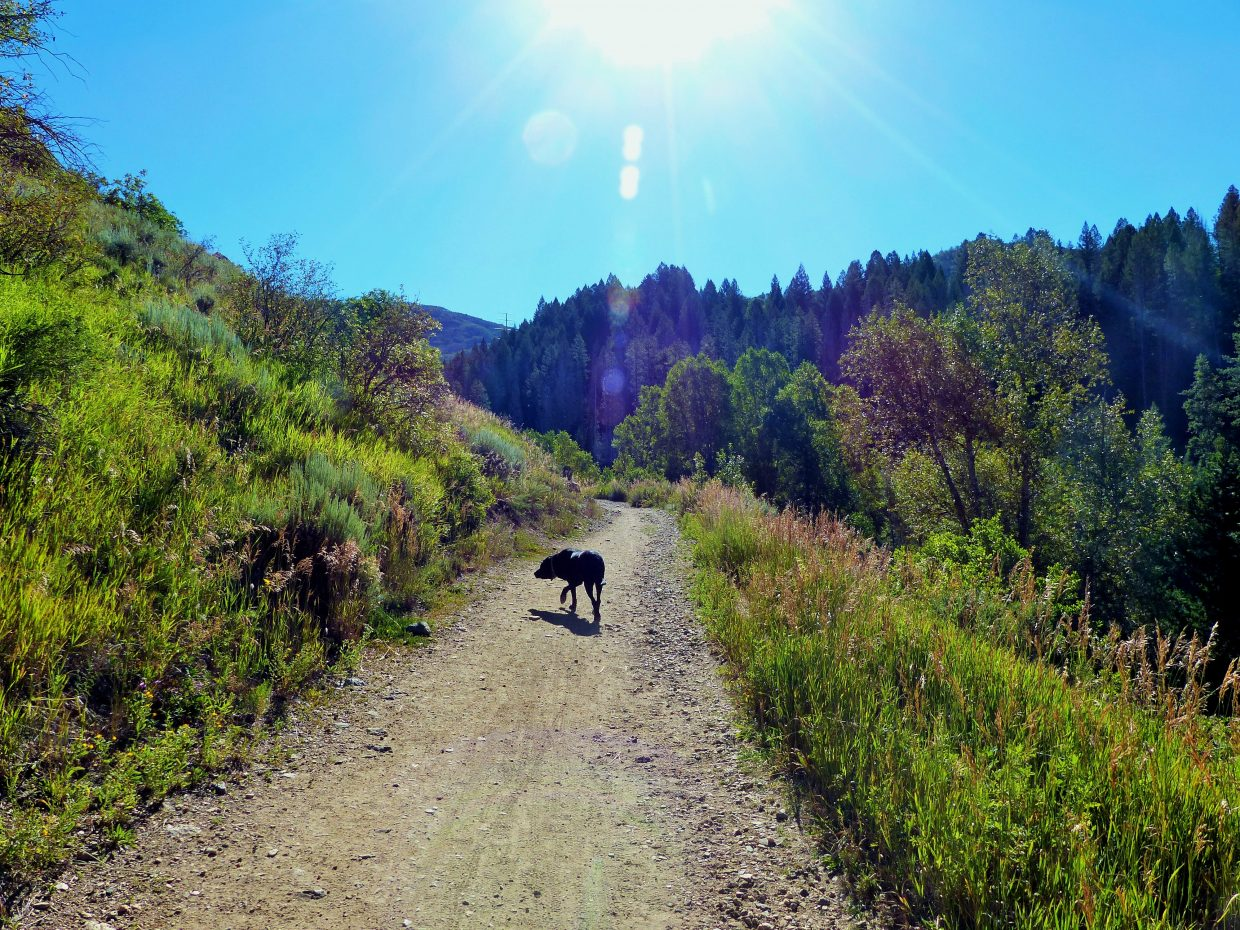 t is a beautiful morning for a hike up Spring Creek Trail in Steamboat Springs. Submitted by Shannon Lukens.