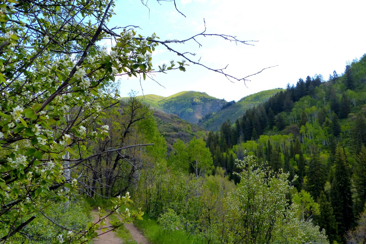 Spring Creek Trail. Submitted by Shannon Lukens.