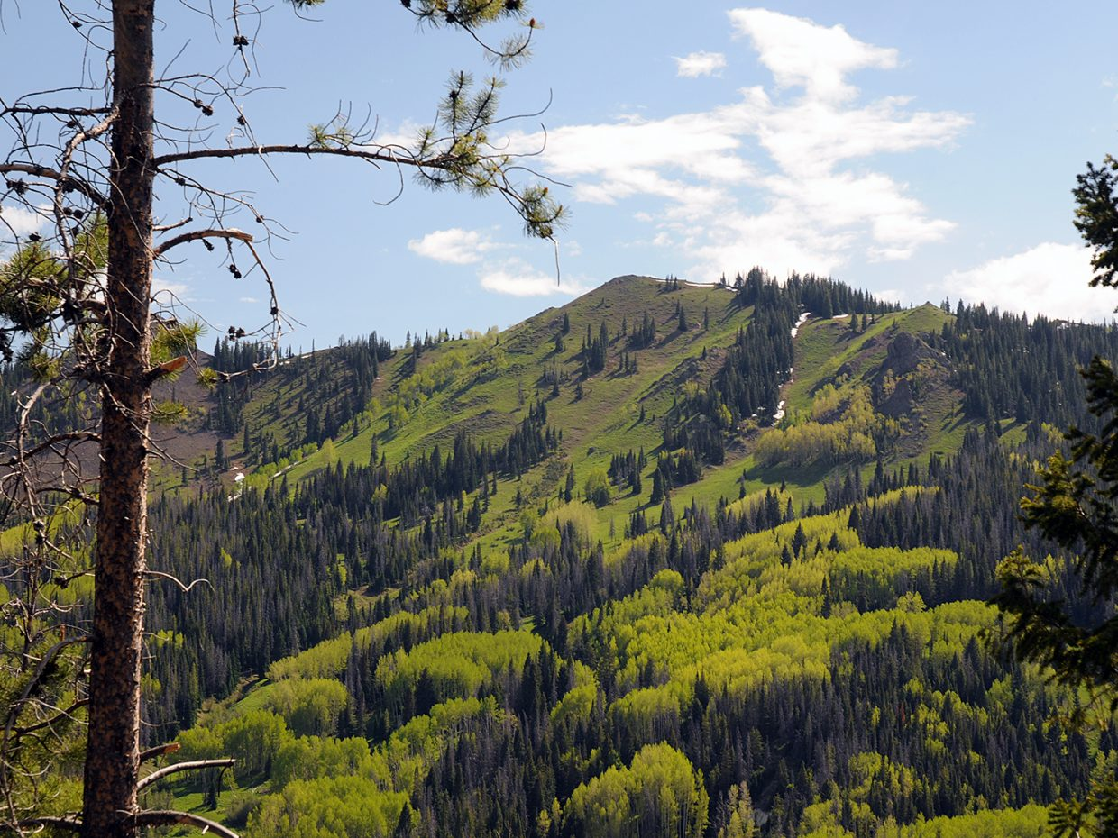 From a hike in North Routt on Tuesday. Submitted by Jeff Hall.