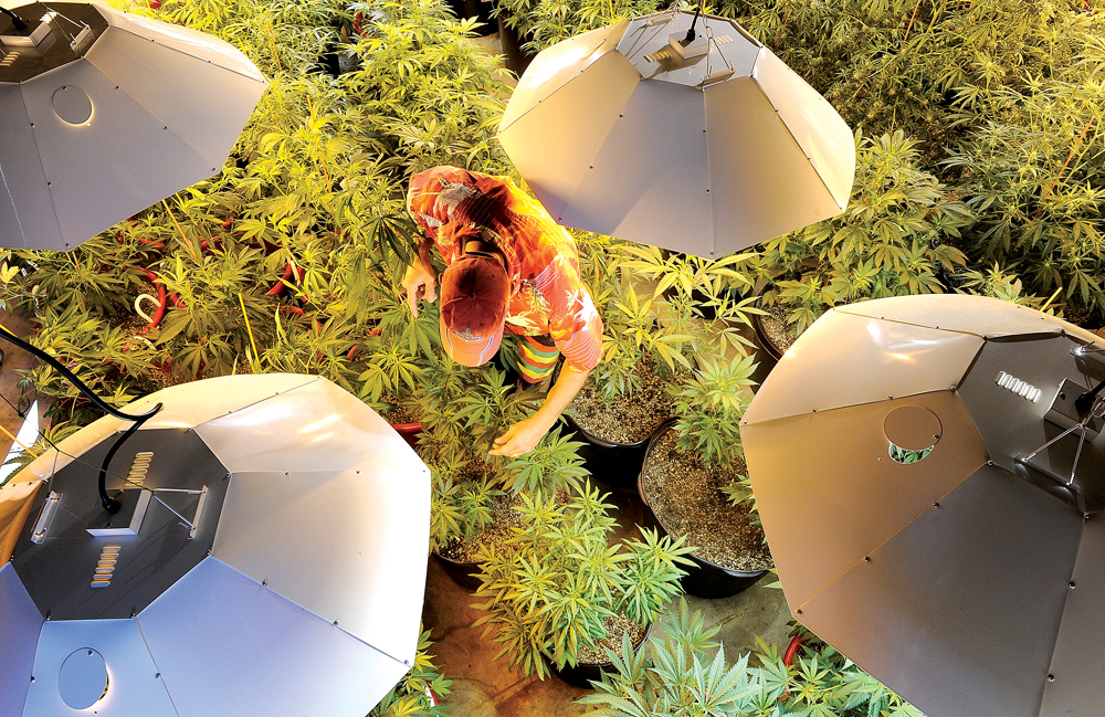 Chris Ward tends to marijuana plants inside his medical marijuana business located in Milner. This photograph, which was taken by John F. Russell, appeared in the Sept. 15, 2010, Steamboat Today as part of a series investigating the impacts of medical marijuana in Steamboat Springs.