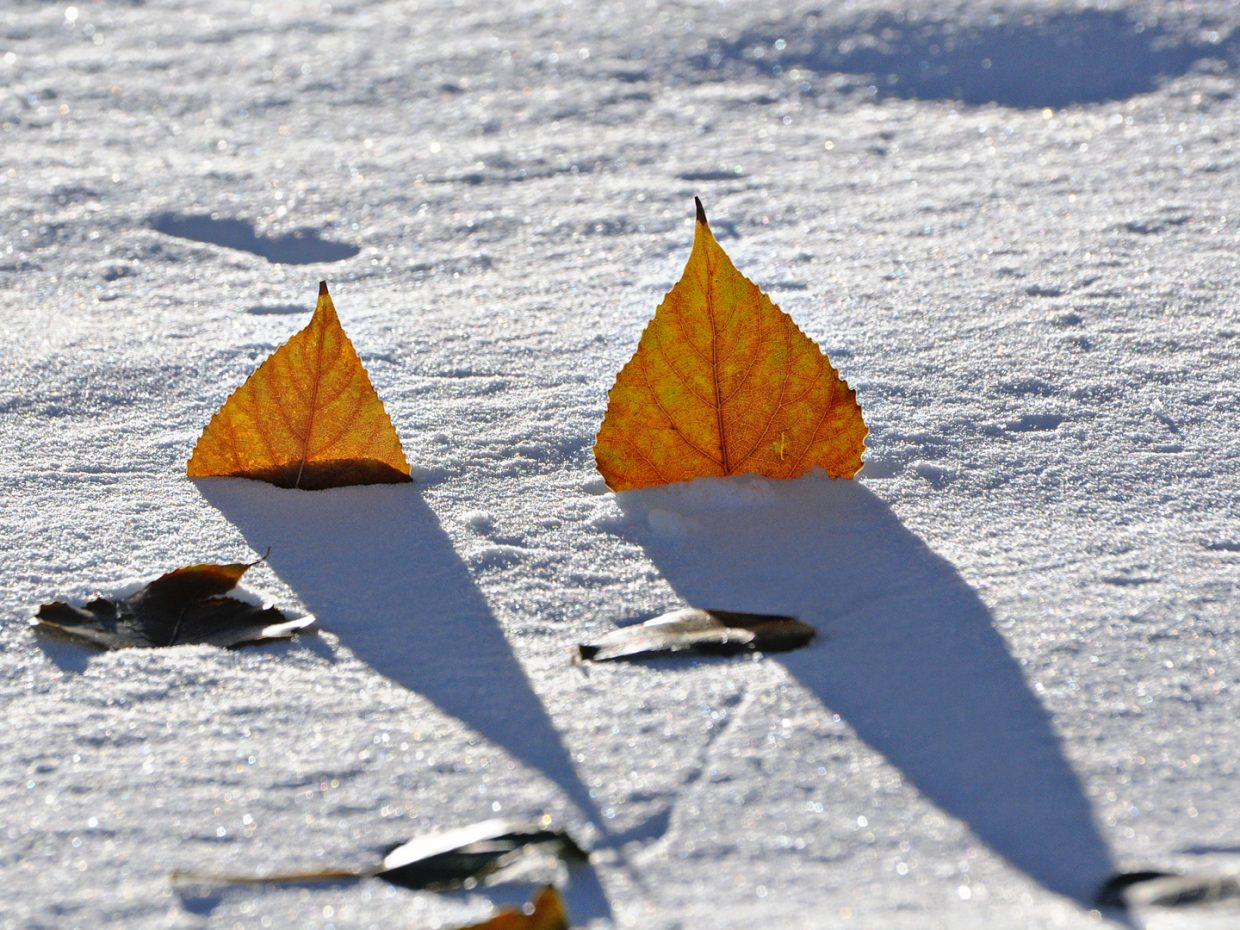 Snow and leaves. Submitted by: Jeff Hall