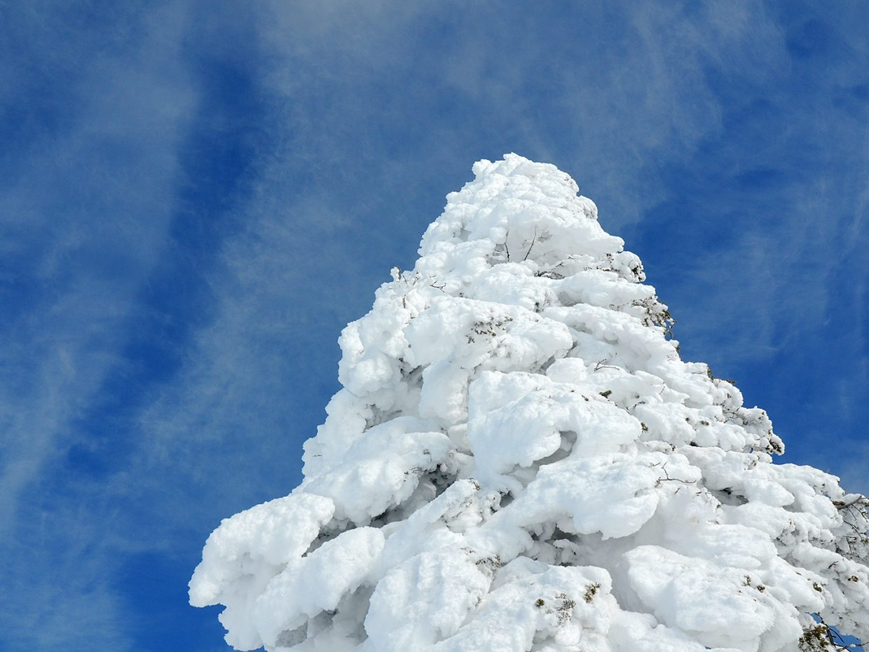 Snow crusted pine and blue skies on Storm Peak. Submitted by Jeff Hall.