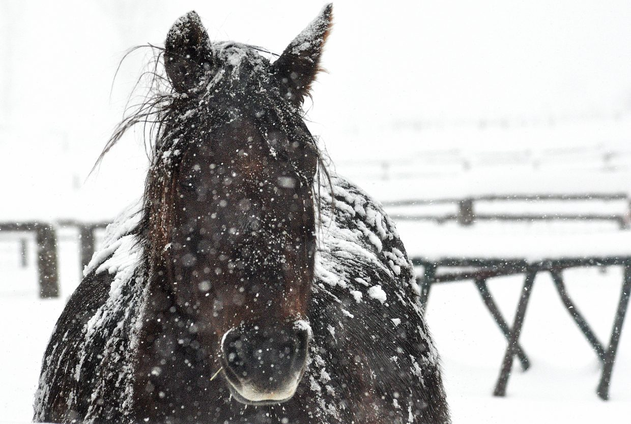 Snow clings to a horse off of Routt County Road 14 near Steamboat Springs on Wednesday morning. Snowfall is expected to continue throughout the week.
