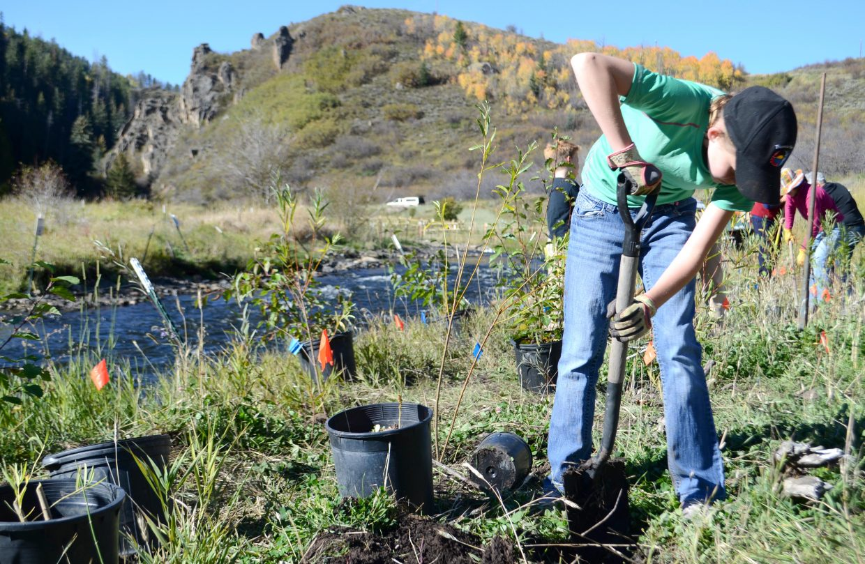 Steamboat Springs Middle School student Bella Waldschmidt, 11, helps plant some new trees Saturday morning at the Stagecoach tailwaters near Stagecoach Dam. A number of volunteers headed to the popular fishing destination Saturday and Sunday to plant Alnus incana trees, a species of alder. Riverkeeper Bill Chace said the alder species has roots good for entwining themselves around densely packed areas of rocks in soil, such as the tailwaters' banks, and can be inundated completely in the spring and still be OK.