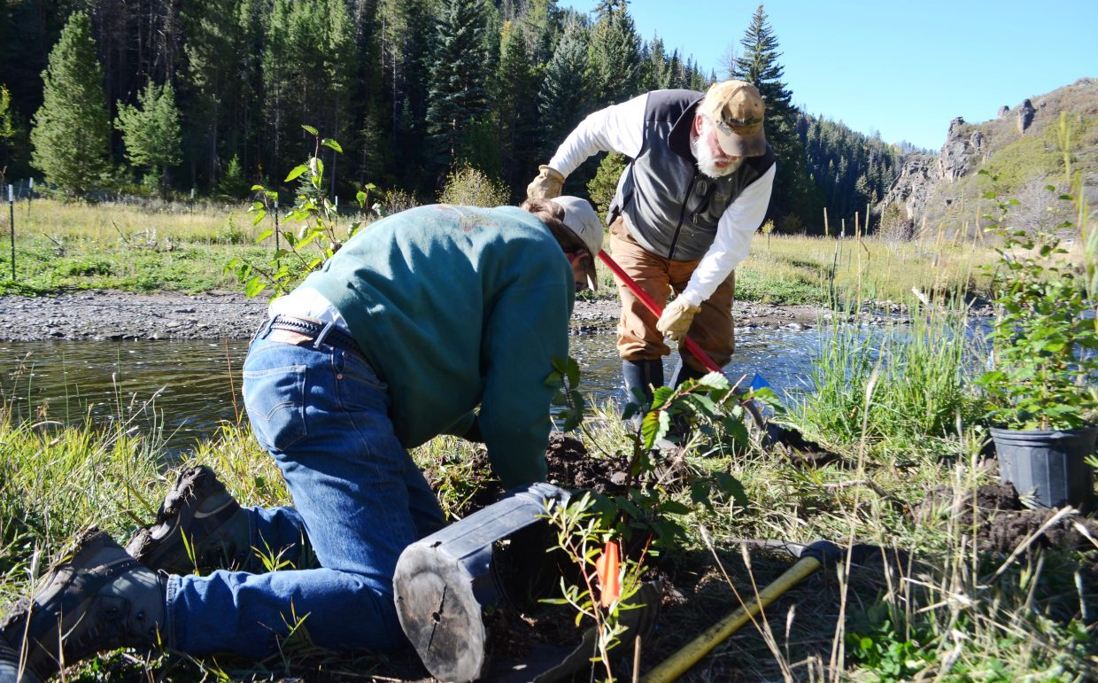 Riverkeeper Bill Chace, right, and Ken Proper dig some holes Saturday morning as they prepare to plant alder trees along the banks of the Stagecoach tailwaters near Stagecoach Dam on Saturday morning.