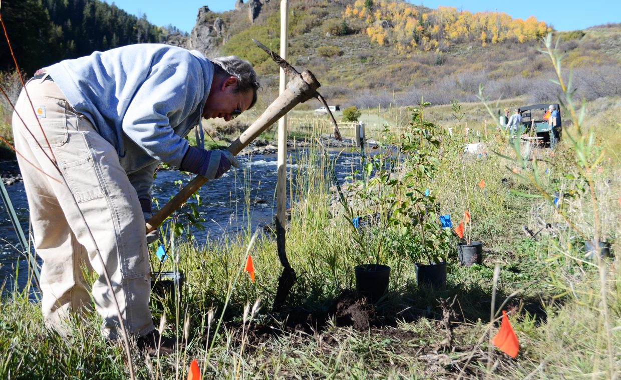 Steamboat Springs' John Houchins loosens up the soil along the banks of the Stagecoach tailwaters Saturday morning where he and other volunteers planted a species of alder trees at the popular fishing destination near Stagecoach Dam.