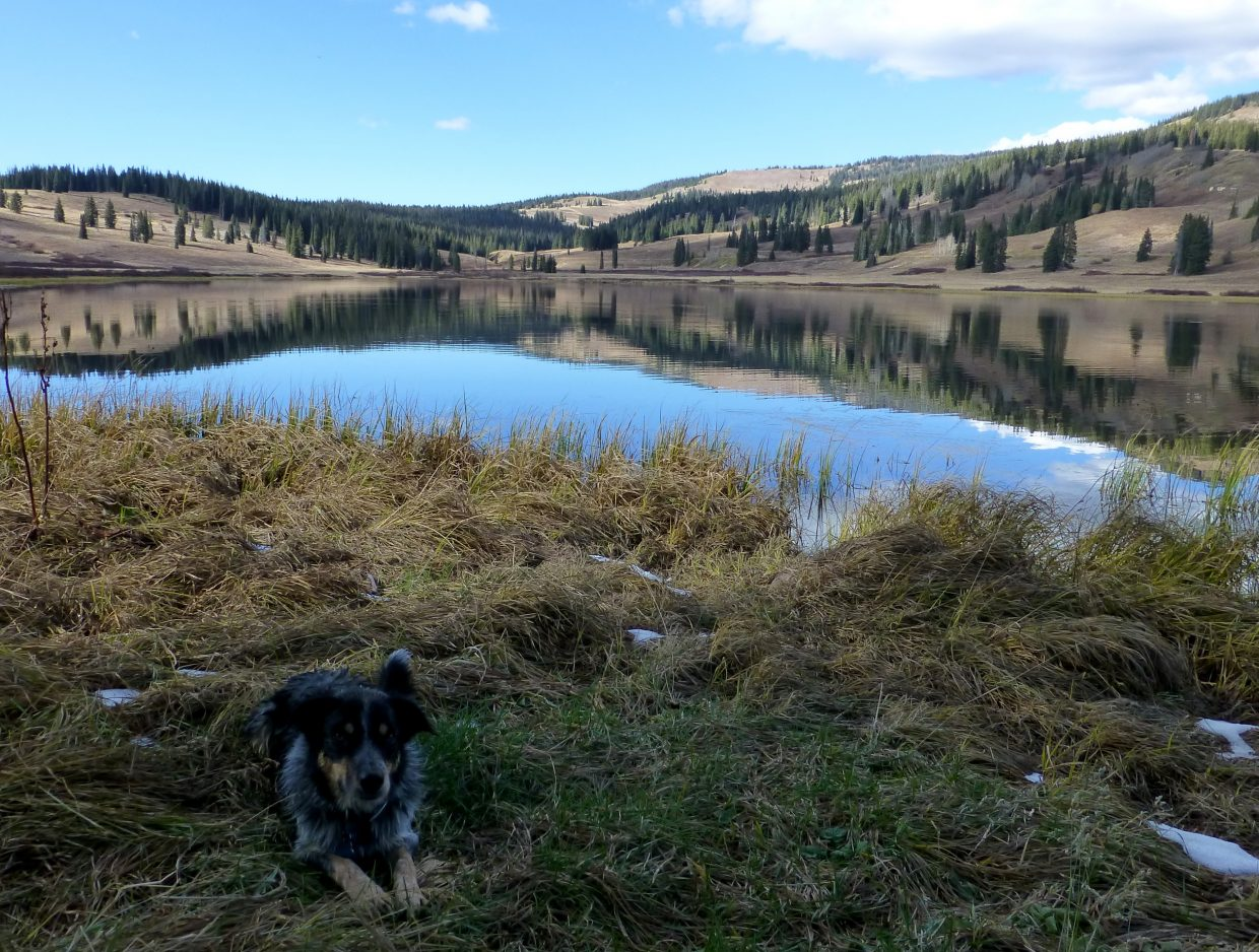 Teton waiting to play stick at Dumont Lake. Submitted by: Gail Hanley