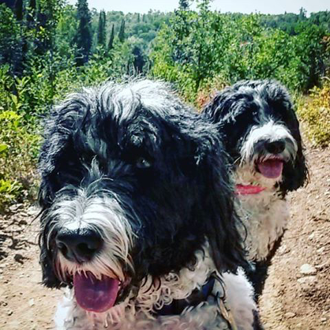 Suns out, tongues out — hiking with these two goofballs at Spring Creek Trail. @dhohs