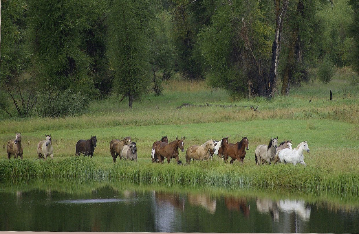 Trotting along in an Elk River Meadow. Submitted by: Sharon Bedell