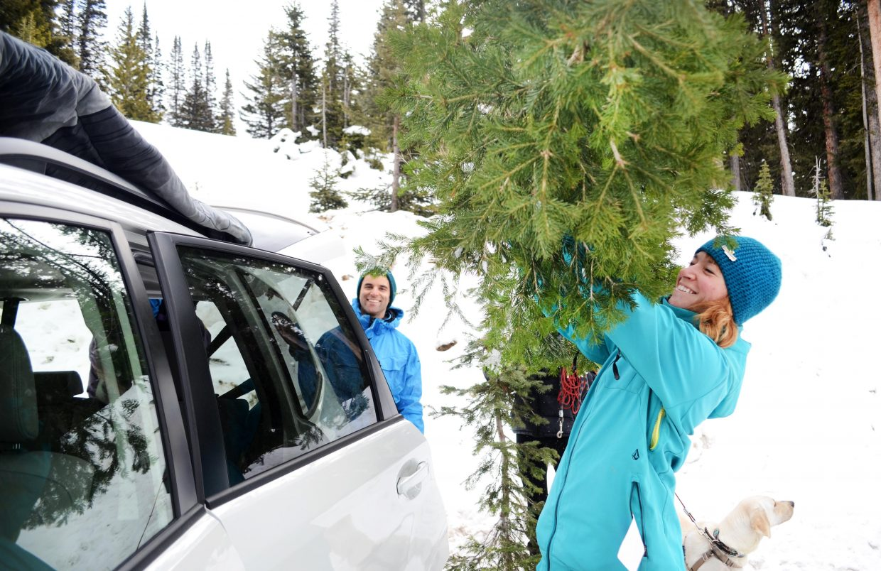 Halea Nudy and her husband, DJ Nudy, load up a pair of freshly harvested Christmas trees they snagged on Rabbit Ears Pass on Sunday morning with their friends Kyle Bota, Eve Stephenson and Stephenson's dog Rosie.