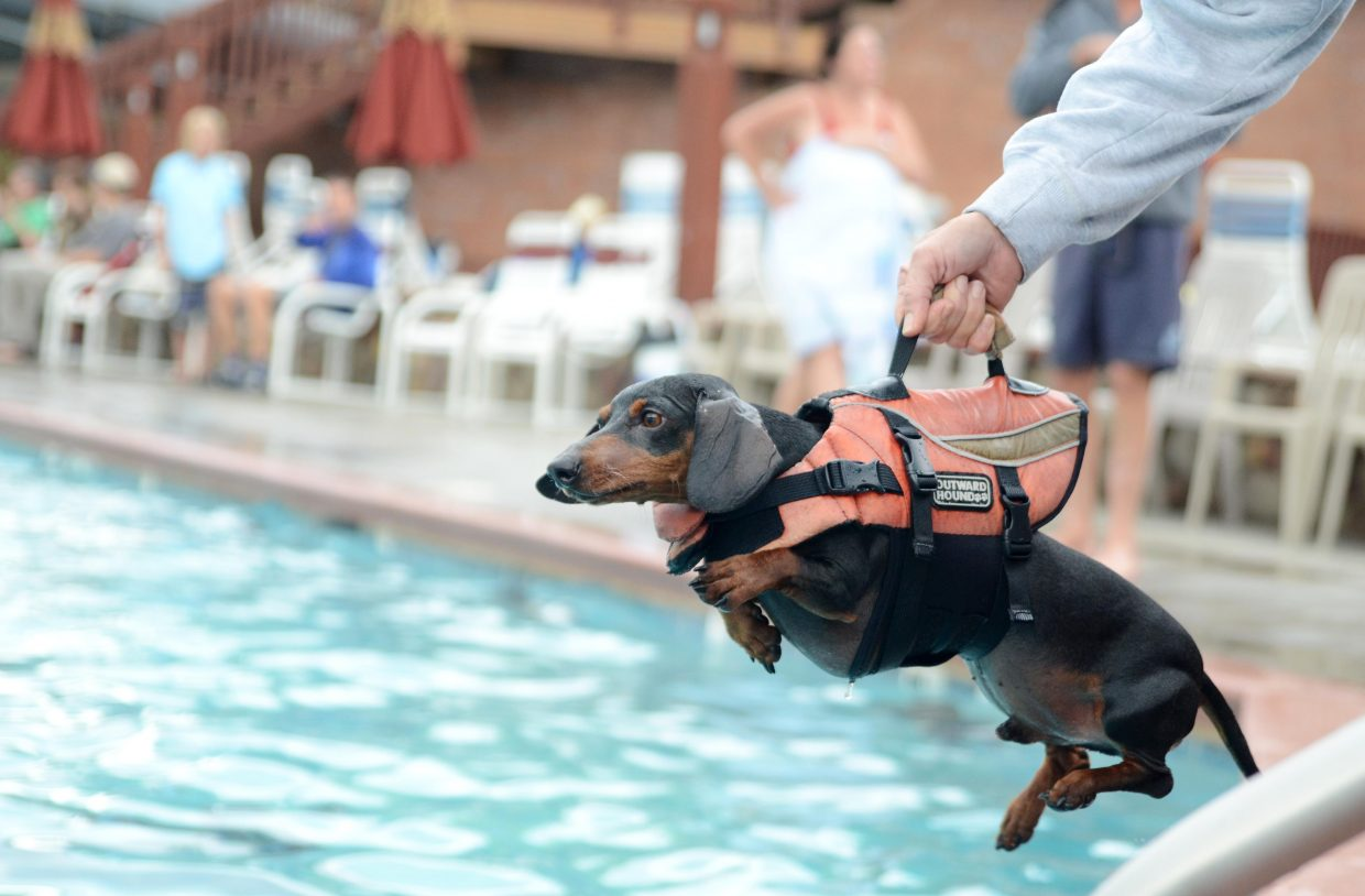 Wild Willy II is held out to retrieve a ball by his owner Debbie Schneider on Sunday at the Old Town Hot Springs' annual Poochy Paddle, a benefit for the Steamboat Springs Animal Shelter.
