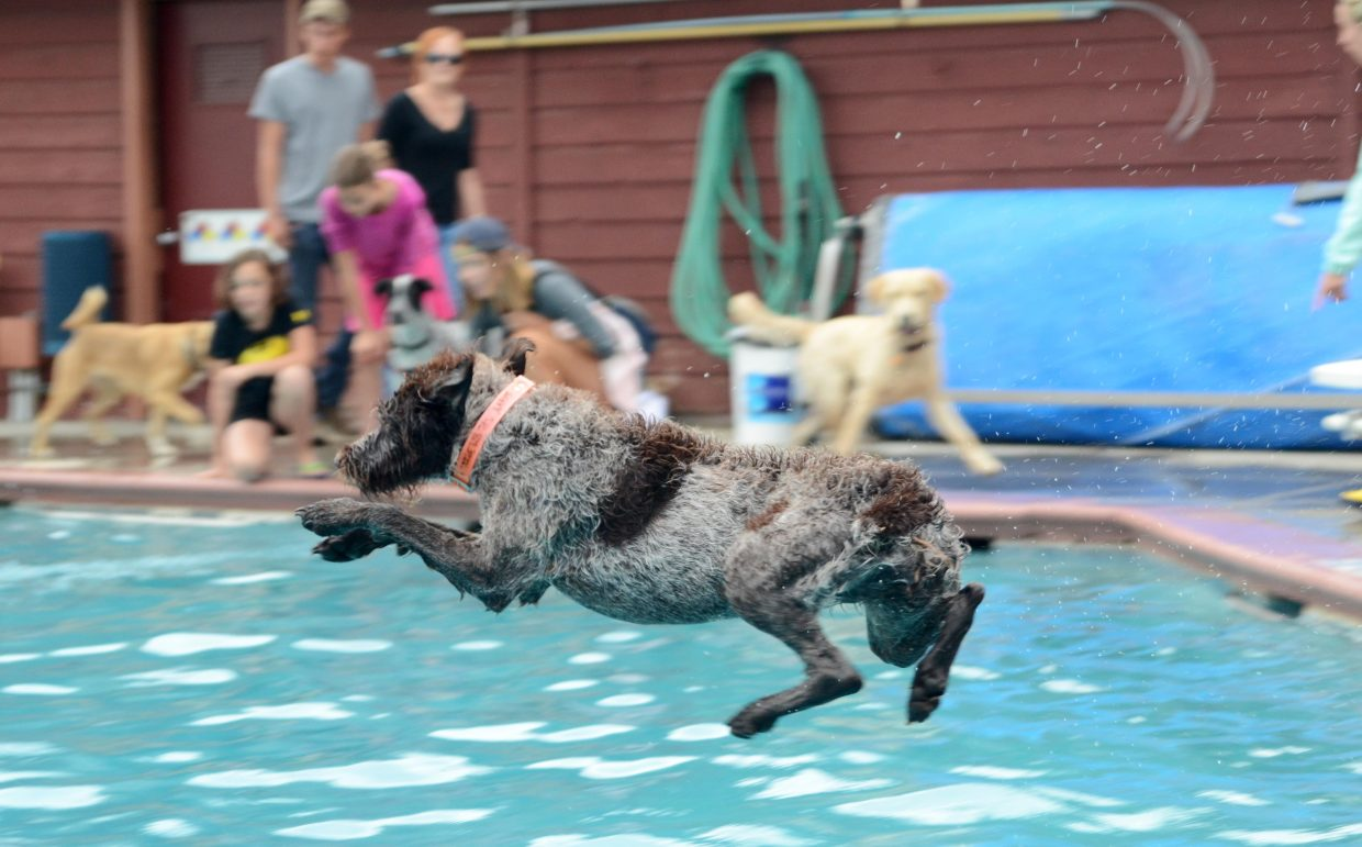 Savvy retrieves a fake duck at the Old Town Hot Springs' annual Poochy Paddle on Sunday.
