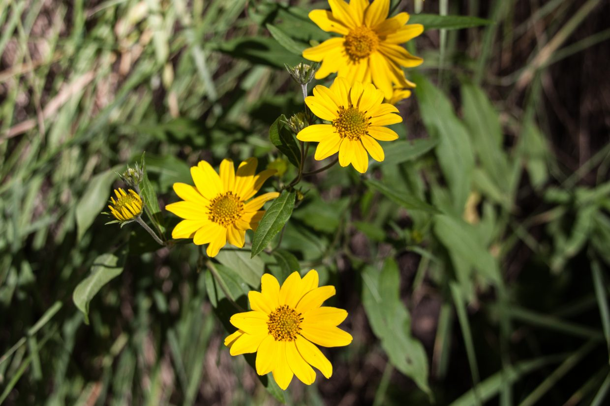 Wild Daisies shine in the morning sun. Submitted by G. Fredric Reynolds.