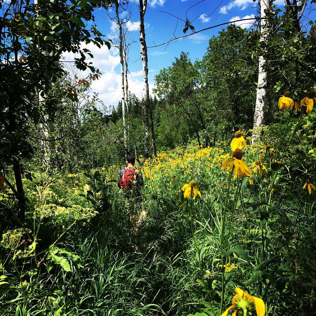 Lost among the wildflowers. @steamboatrunnergirl