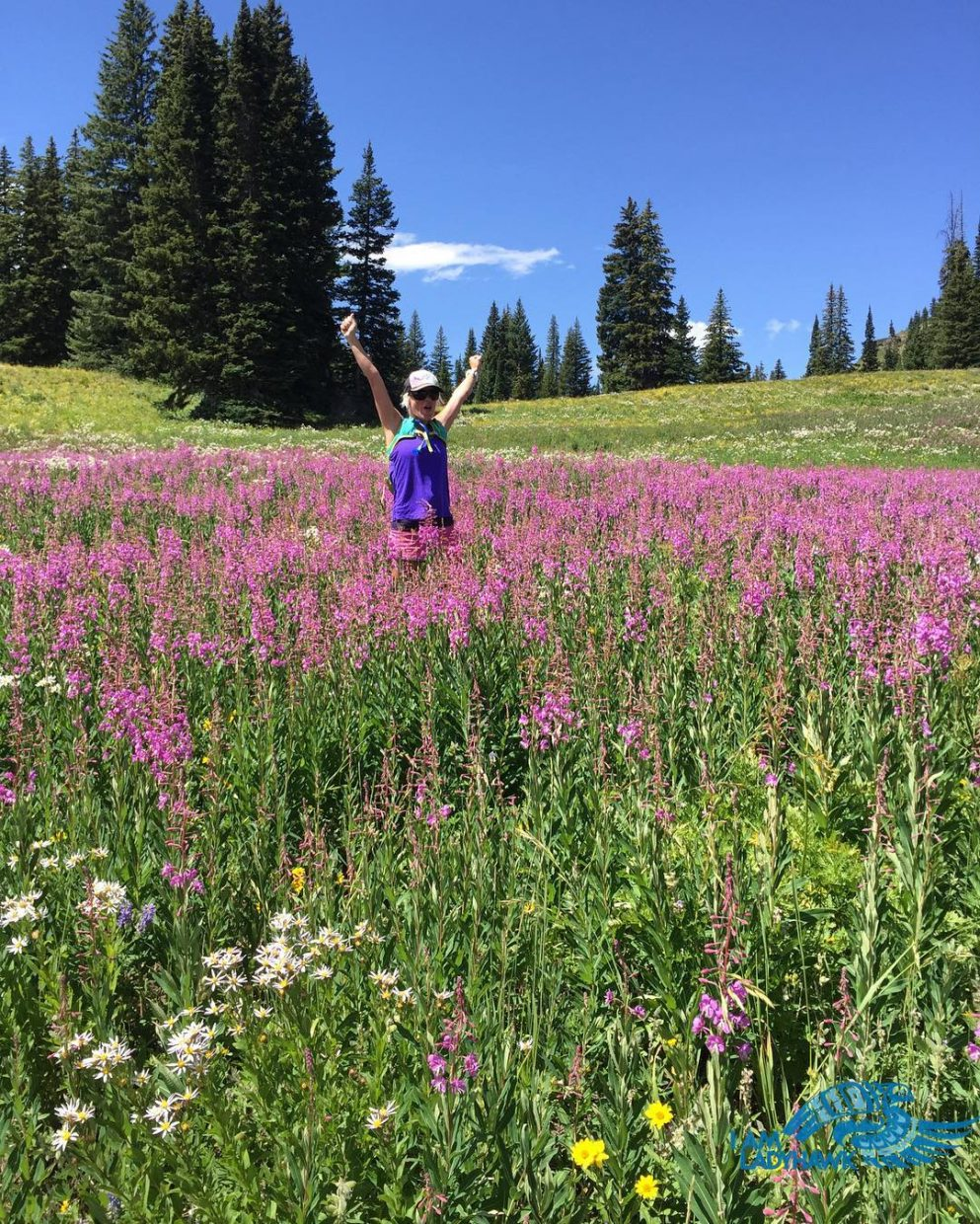 The wildflowers in Colorado are going off right now. @iam_ladyhawke