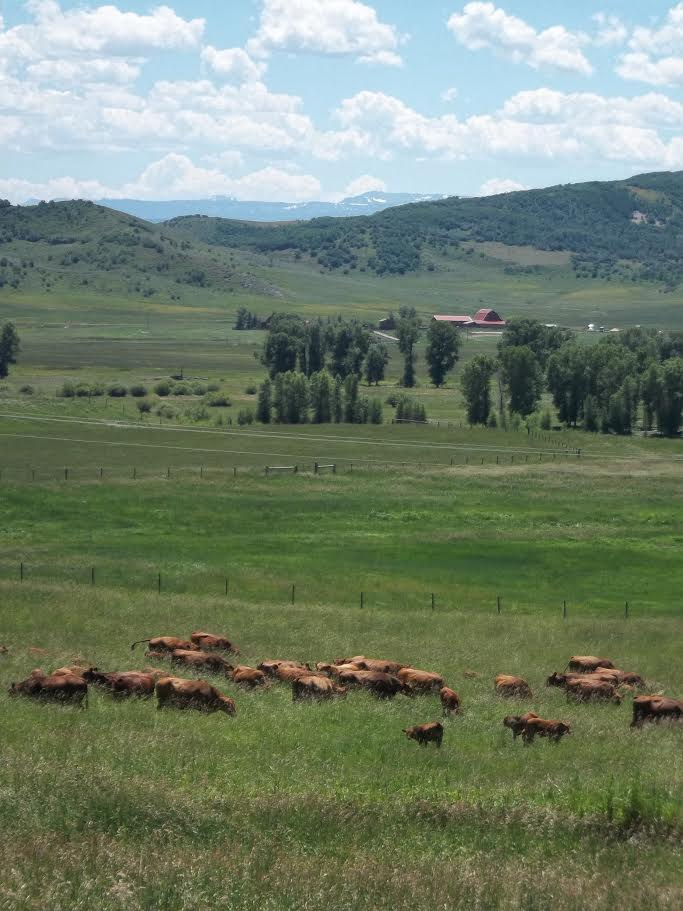 Cows graze with Elk Mountain as a backdrop. Submitted by William Dorr.