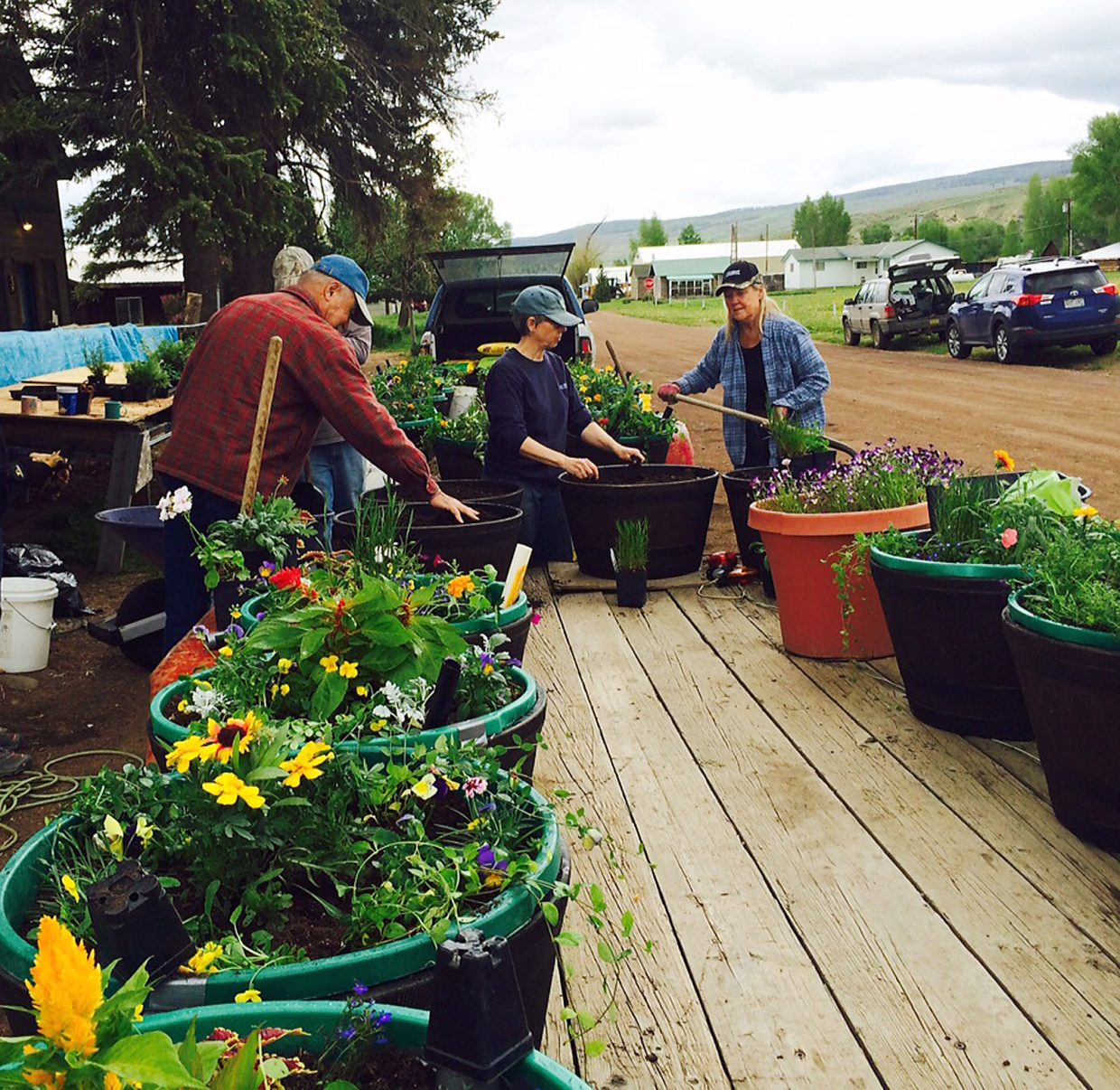 Don Asta, left, Teri Schlegel and Sandra Longren plant flower barrels in Yampa Sunday. The flowers were grown in the Future Farmers of America greenhouse at Soroco High School.