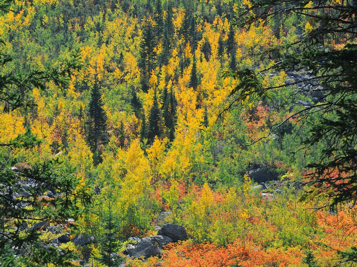Fall colors, Mount Zirkel Wilderness Area. Submitted by: Jeff Hall