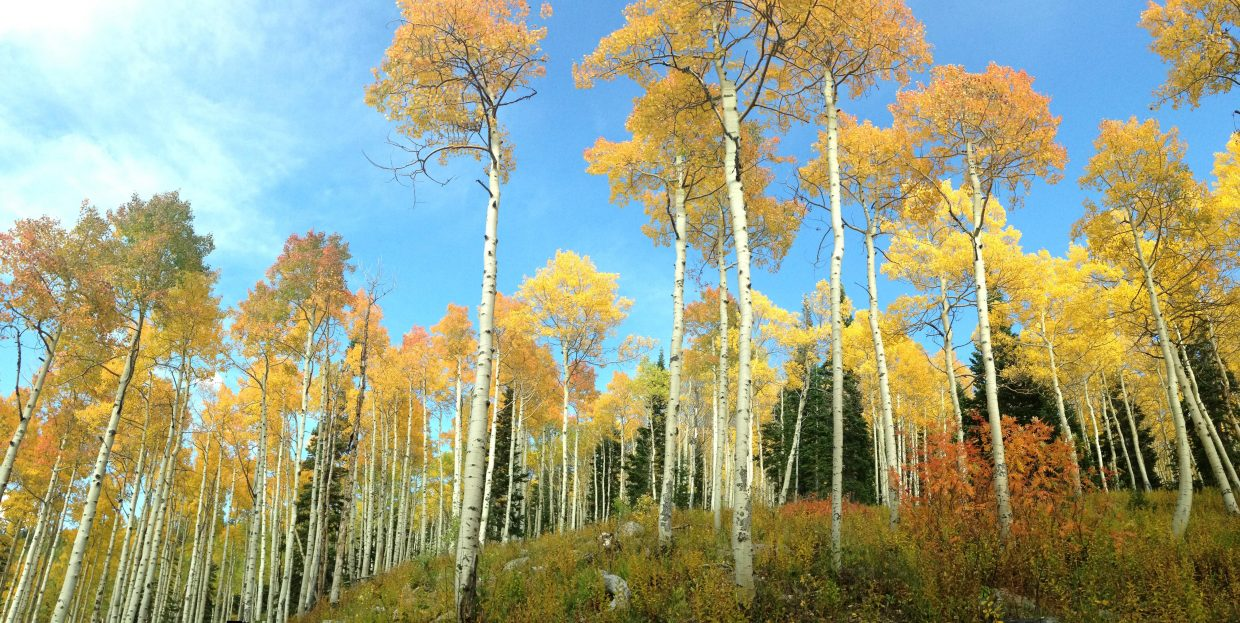 Aspens in lower shadows. Submitted by Dave Ornberg.
