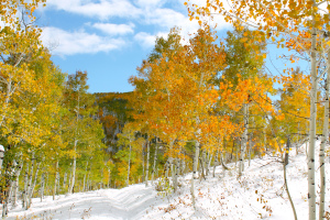 Changing leaves on Buff Pass. Submitted by: Clarice Hubbell